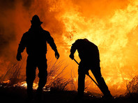 С октября 2019 года в огне погибли 25 человек, в том числе четверо пожарных, кроме того, по оценкам экологов, от пожара погибли более миллиарда животных