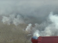 О начале пожара в чернобыльской зоне стало известно 4 апреля